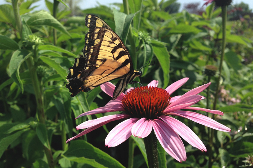 Planting for the pollinators