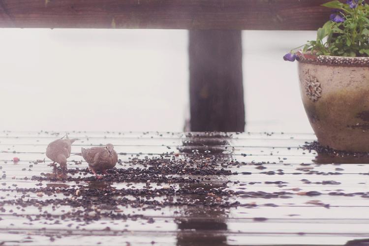 feedbirds