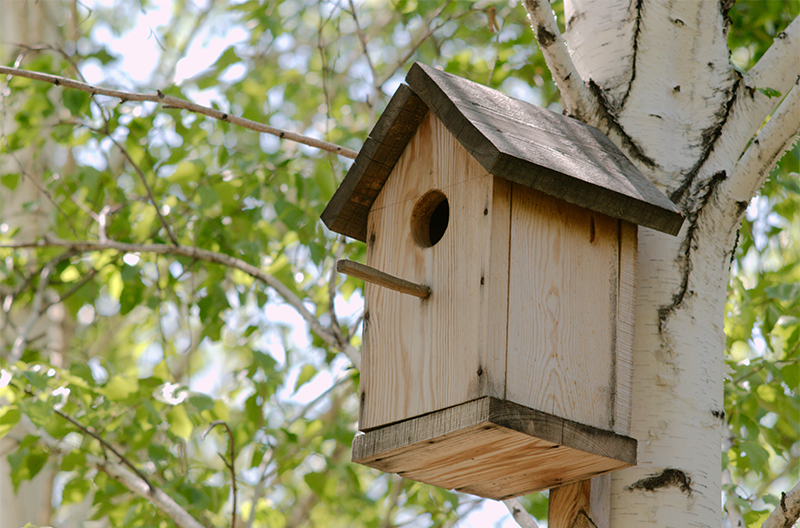 greenstreet-gardens-maryland-birdhouse-mounted-to-a-tree