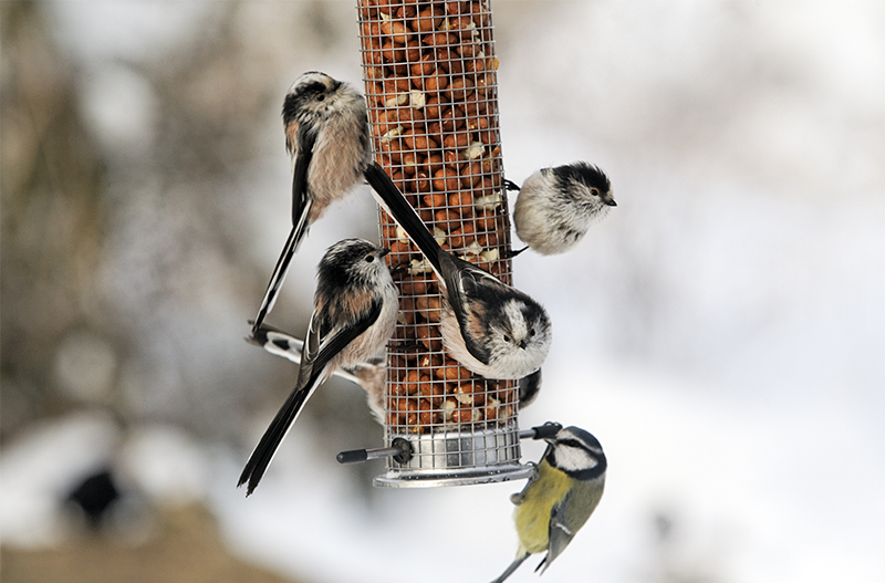 greenstreet-gardens-maryland-group-of-birds-on-bird-feeder