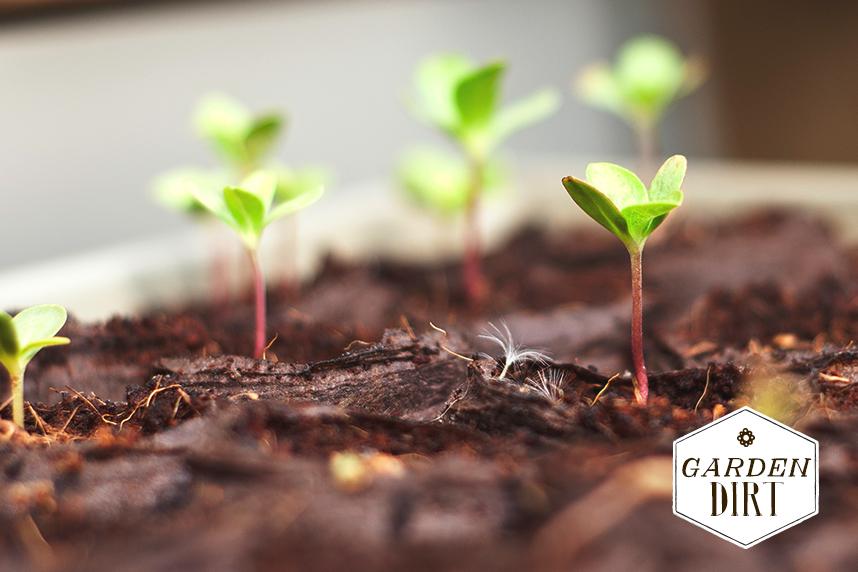 startingfromseed2_gardendirt