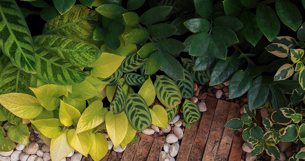 best houseplants growing low light alexandria plant medley