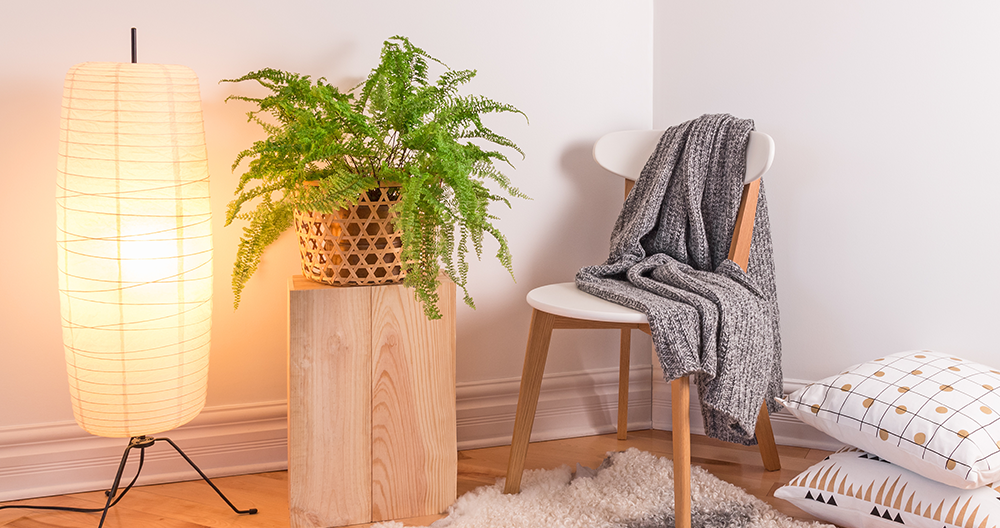 pet friendly fern plant in living room