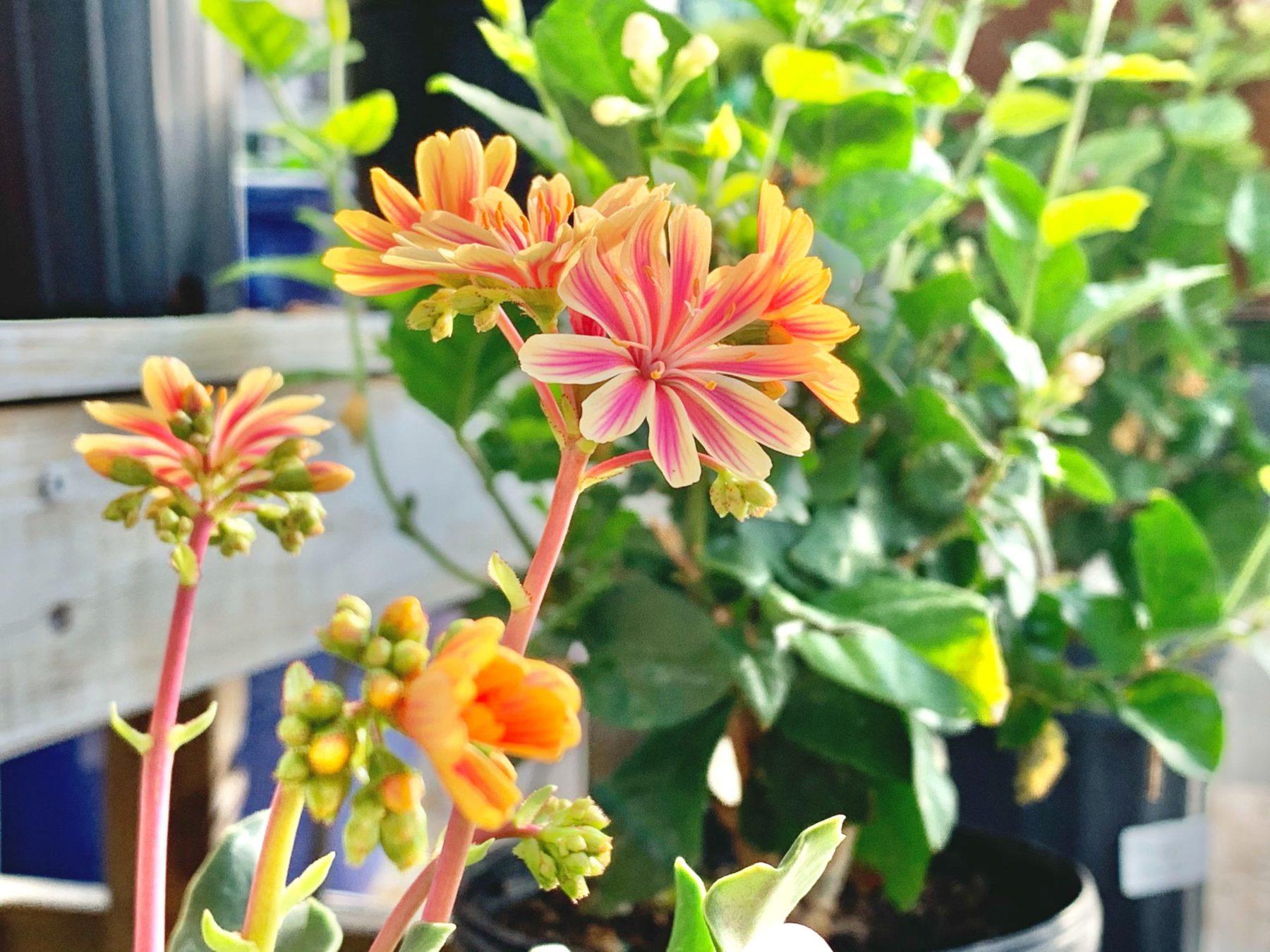 Greenstreet.Orange.Flower.03.30.2020